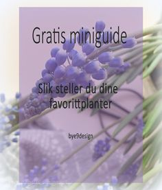 Gratis miniguide - stell av planter