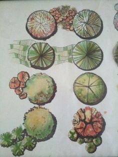 Árboles representados en planta. Técnica de plumón.
