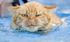 Best Cat Bed | Cool Pet Pad Cooling Gel Mat Dog Cat Bed XL 70x110cm | eBay
