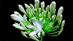 9 Delightful GIFs Of Flowers Coming Into Bloom