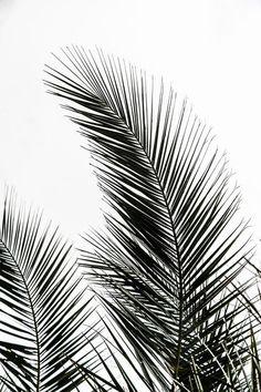 Palm Leaves Art Print