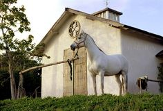 A barn complete with beautiful white horse