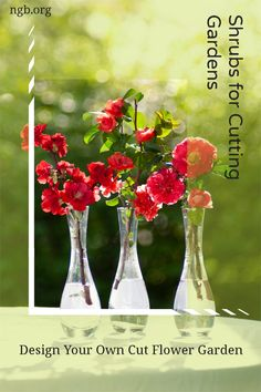 Design a cut flower garden with flowering shrubs that make fantastic flower arrangements. If you grow hydrangea, spirea, flowering quince, or forsythia in your garden, your vases will overflow with beautiful blooms. Landscaping Plants, Front Yard Landscaping, Japanese Beetles, Cut Flower Garden, Low Maintenance Garden, Flowering Shrubs, Tea Roses, Cut Flowers, Hydrangea