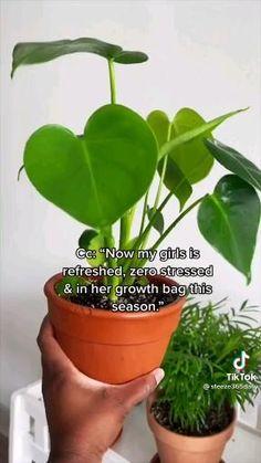 House Plants Decor, Garden Plants, Indoor Plants, Household Plants, Inside Plants, Plant Aesthetic, House Plant Care, Growing Plants, Houseplants