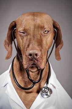 DR. VIZSLA #vizslalife #bluandred #bluandreddotcom