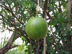 Foto Blog Puerto Rico: Higüera