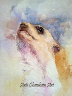Arti's art -- Life as I see it: The Meerkat and the Raccoon