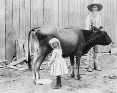 Little Girl Milks Cow As Old Man Watches 8x10 Reprint Of Old Photo