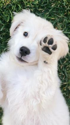 Cute Baby Dogs, Cute Funny Babies, Cute Dogs And Puppies, Cute Baby Animals, Pet Dogs, Funny Animals, Pets, Doggies, Happy Dogs