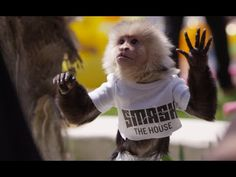 Dimitri Vegas & Like Mike vs Ummet Ozcan - The Hum ( Official Music Video ) - YouTube