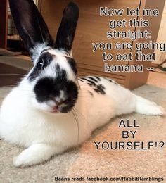 Guess I like to collect things. Here are some memes that have been found around the internet and perhaps been featured in a Rabbit Rambli. Bunny Meme, Funny Bunnies, Baby Bunnies, Cute Bunny, Easter Bunny, Cute Animal Quotes, Funny Animal Memes, Cute Funny Animals, Cute Baby Animals