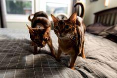 When i have treats… - http://cutecatshq.com/cats/when-i-have-treats/