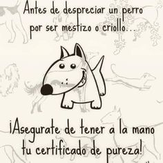 Animalista                                                       …