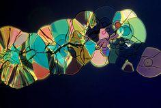 Tartaric acid crystal | 1979 Photomicrography Competition | Nikon Small World