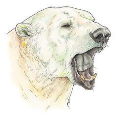 Polar Bear Drawing, Polar Bear Tattoo, Bear Illustration, Illustration Sketches, Wildlife Paintings, Animal Paintings, Animal Sketches, Animal Drawings, Bear Sketch