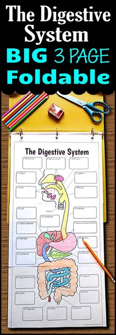 Teach the digestive system using this very large 3 page digestive system foldable that can be used in an INB or binder.  Students will love the space they have to color as well as record all their descriptions.  5 different options are provided for differentiation.  Use it as a lesson that can then be used as a graphic organizer for review.:
