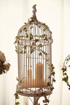 bird cages everywhere... for a garden feel wedding