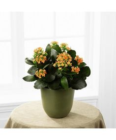 The Kalanchoe is a wonderful way to bring blooming color into everyday! Displaying tiny bright orange flowers amongst lush green foliage, this beautiful plant is presented in a green biodegradable pot . Romantic Flowers, All Flowers, Orange Flowers, Send Flowers, Flower Delivery Service, Same Day Flower Delivery, House Plant Care, House Plants, House Plant Delivery