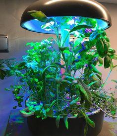 @kackac15 #plantui pořád jede :-) šajvěj, bazalka, koriandr, petržel, tymián a mangold Instagram