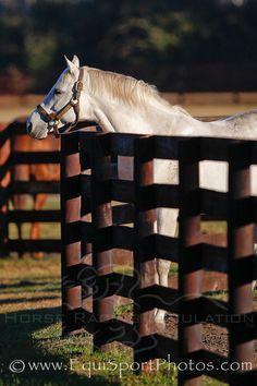 He (Alphabet Soup) was a lot like Silver Charm - a tough, strong horse_ Hofmans