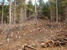 La tala de arboles protege menos a los seres vivos del monoxido de carbono