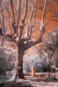 #infrared #nature #tree ♥♥♥