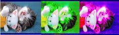 Imagen retocada digitalmente con la herramienta Balance de Color, donde se encuentra la imagen original y en las otras dos fue donde se aplicó la herramienta.