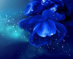 Beautiful Blue - Blue, Petal, Spark, Flower