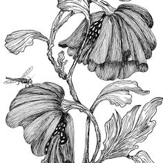 Images For > Pen And Ink Drawings Of Flowers