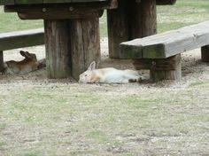 Okunoshima Island lies off Japan's coast and is overrun by rabbits.