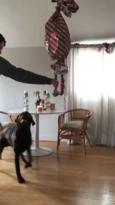 Funny Dog Memes, Funny Animal Videos, Cute Funny Animals, Animal Memes, Cute Baby Animals, Funny Cute, Funny Dogs, Animals And Pets, Happy Birthday Animals Funny