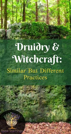 Are you a druid or a witch? Learn the differences in each practice | rainateachings #druidry #witchcraft #metaphysics #occult #celticdruids