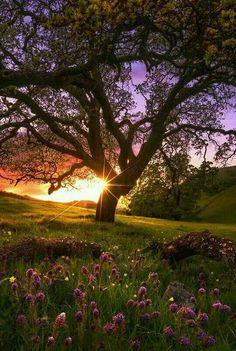 It would be a great place to have a picnic while looking at the same time the beauty of the place! !!!!!!