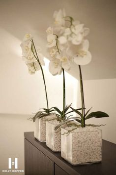 Luxury White Pebbles Interiors That Will Blow Your Mind - storczyki - Orchideen Orchid Flower Arrangements, Orchid Plants, Kelly Hoppen Interiors, White Pebbles, White Pebble Garden, Deco Nature, Deco Floral, White Orchids, Diy Garden Decor