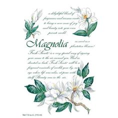Willowbrook Fresh Scents Scented Sachet - Magnolia