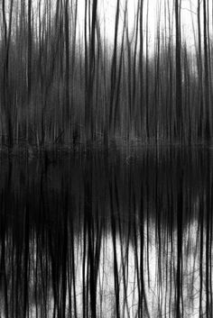 Thielenbruch Swamp 6 | Abstract