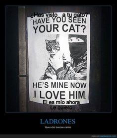 LADRONES - Que sólo buscan cariño