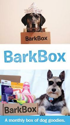 I love my dogs so much, they deserve a BarkBox (monthly goodies in the mail for your pups)