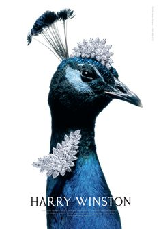 Harry Winston Ad. - that peacock is so DONE with your bullshit