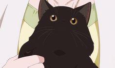 ☆ Hero ☆ - kanojo to kanojo no neko, she and her cat, daru - Cute Anime Cat, Anime Kawaii, Anime Animals, Cute Animals, Neko, Gifs, She And Her Cat, Gato Anime, Japanese Film