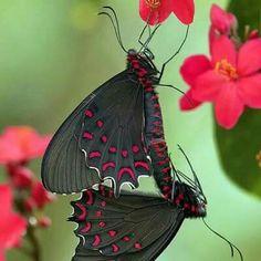 Papillon Jaune Insecte Animal Safari peint à la main Figurine Royaume Caché