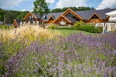 #avalonresort #whereluxuryisnatural #lavender #summer #relax #beautiful #ourhotel #dailygram