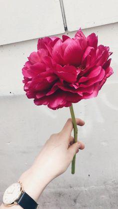Burgundy peony by Sydney Wedding Florist Erichsen Botanica Peonies Bouquet, Peony, Bridesmaid Bouquet, Wedding Bouquets, Floral Wedding, Wedding Flowers, Sydney Wedding, Wedding Decorations, Burgundy