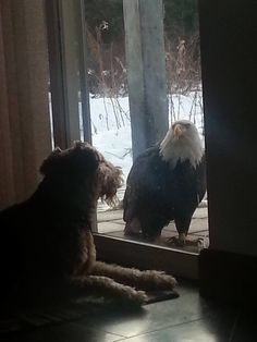 An eagle came to visit~ oh, my~