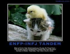 I'm INFJ and once had a good friend who was ENFP...you can imagine the shenanigans that resulted from THAT one.