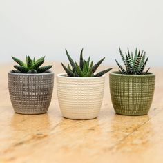 Trio Of Ceramic Planters With Succulent Plants Are you interested in our ceramic small cactus pot? Bathroom Niche, Bathroom Plants, Bathroom Sets, Planting Succulents, Potted Plants, Indoor Plants, Succulent Plants, Succulent Table Decor, Faux Plants