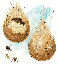 Spider's egg sacs Merry Christmas, @jdfoolzy