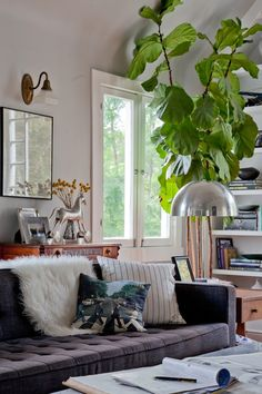Ahh, I want one of these fig tree things.    Emily Henderson — Stylist - BLOG - FDR Chic - a dude's mix of antique, mid-century and bohemian style.