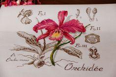 DFEA Orchidea, Cross stitch on ivory aida with DMC thread Cross Stitch Kitchen, Cross Stitch Love, Cross Stitch Flowers, Cross Stitching, Cross Stitch Embroidery, Victorian Cross Stitch, Flora Pattern, Cross Stitch Numbers, Swedish Weaving