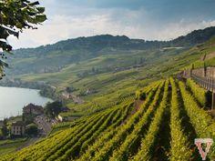 #Suisse – #Lavaux et ses vignes entre ciel et lac via @BlogVoyagista